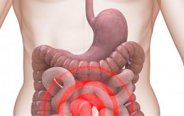 debelo-crijevo
